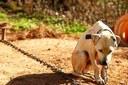 Audiência discute lei de maus-tratos contra animais